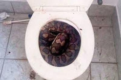 toiletbrown